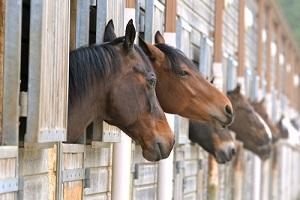 pferdestallbohlen